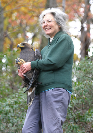 Holding a radio-tagged golden eagle