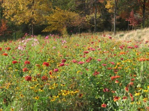 The 150- by 50-foot wildflower garden at Mountain Meadows
