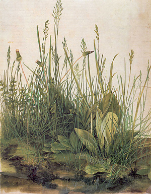 "Detail from ""The Great Piece of Turf"" by Albrecht Dürer (watercolor, 1503)"