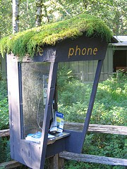 Telephone in the Hoh rainforest, by dfb on Flickr (Creative Commons BY-NC-SA licence)