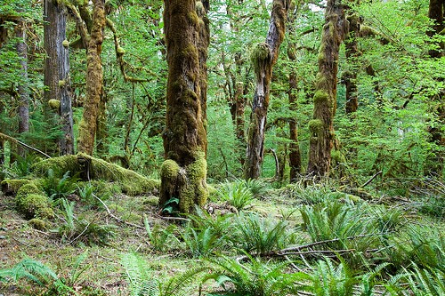 Along the Hoh River Trail, by Jeff Hutchison on Flickr