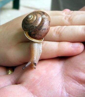Penis Snail 95