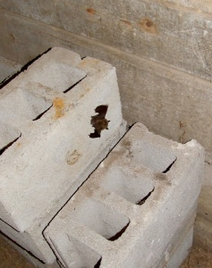 A bat on the side of a concrete block
