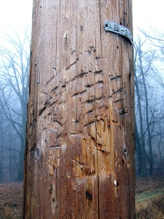 Powerline pole on the ridgetop marked by bears (Photo by Dave Bonta)
