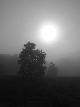 The morning sun through the fog over the First Field