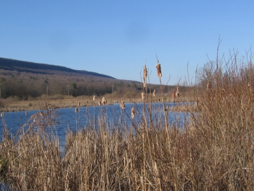The Julian Wetlands with the Bald Eagle Mountain in the background
