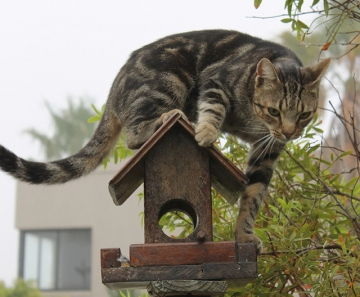 A cat on a birdfeeder hunting birds