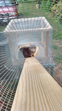 A catio with a cat inside