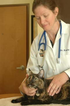 A veterinarian examining a cat