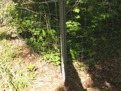 One of our deer exclosure fences showing the abundance of vegetation inside it