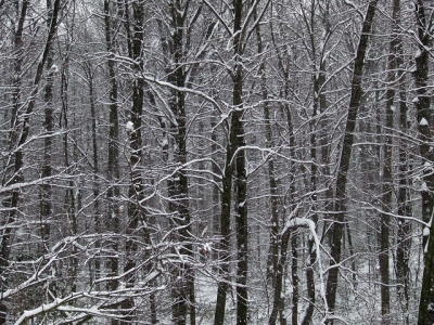 The edge of the Plummer's Hollow woods in snow