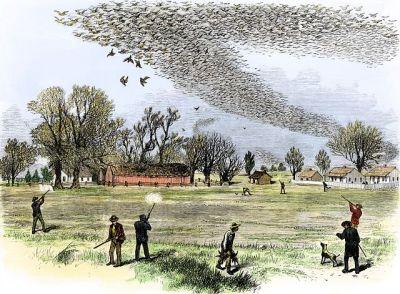 Shooting passenger pigeons in 1875 in Louisiana