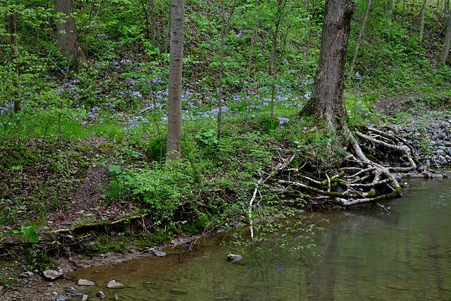 A view of Canoe Creek in the Canoe Creek State Park, downstream from the Old Forest Unit